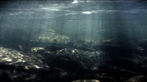 still from the Super 8mm film Yessling, showing a view of the river Plym below the surface, with rays of sunlight filtering through